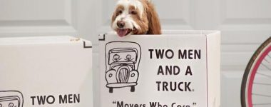 10 tips for moving with a dog