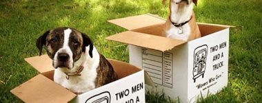 moving with dogs